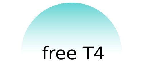 הורמון free T4